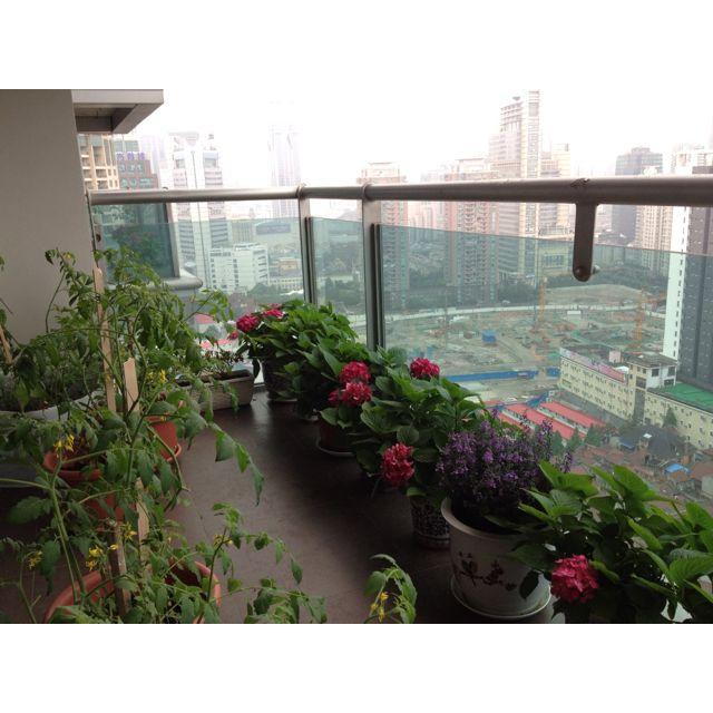 175 best Urban Garden | Balcony images on Pinterest ...