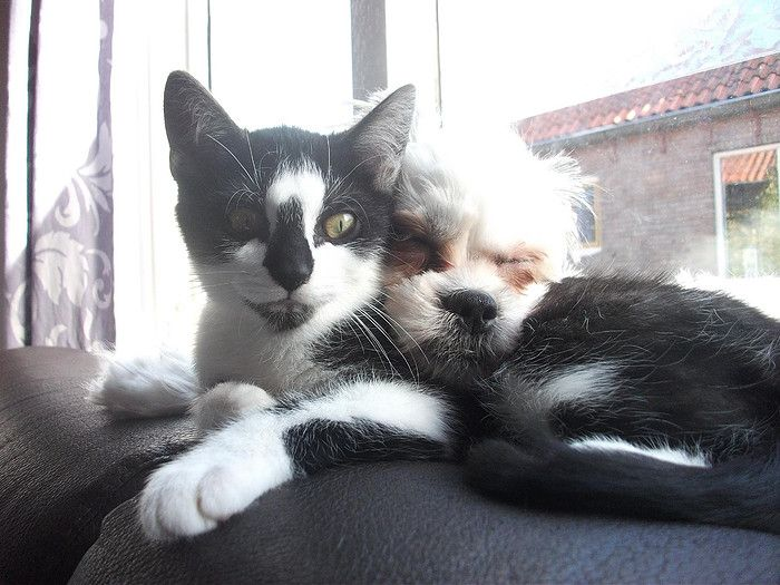 Bella en Jake beste vriendjes