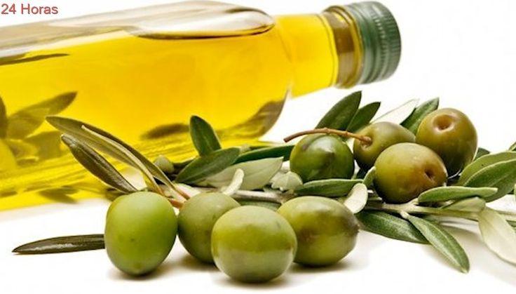 Iglesia Mormona se consolida como el mayor productor de aceite de oliva en Chile