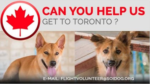 Do you have a confirmed booking on Thai Airways, All Nippon Airways (ANA), China Airlines, Qatar, Korean Air, JAL, EVA, Lufthansa or KLM, Please consider helping us get adopted dogs to their forever homes at no extra cost to you. Soi Dog handles all the paperwork and logistics; you just need to turn up at the airport! If you can help, PLEASE EMAIL flightvolunteer@soidog.org for more details. http://www.soidog.org/en/be-a-flight-volunteer