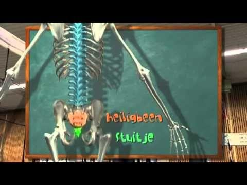 Het skelet - biologielessen.nl