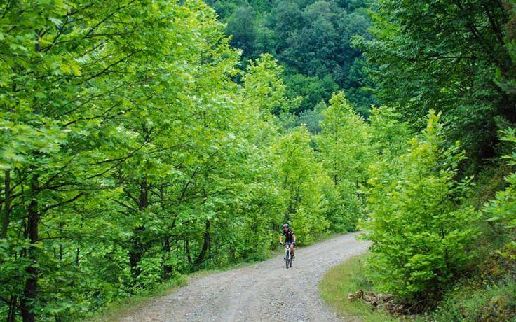 Yenice Ormanları, Karabük Karabük sınlarındaki Yenice Ormanları, tropik bölgeler dışında dünyada ender rastlanan el değmemiş devasa ağaçları ve kendine özgü muhteşem bitki örtüsüyle oldukça geniş bir alanda bulunuyor.Bisiklet sporu ile uğraşanların ilgi gösterdiği yerlerden toplamda 210 km boyunca işaretlenen yolda,21 parkurun yanı sıra alternatif yürüyüş parkurları da bulunuyor. Günübirlik, kısa ve uzun olmak üzere 3 ana kategoriye sahip alanda ayrıca 292 km'lik bir de dağ bisikleti rotası…