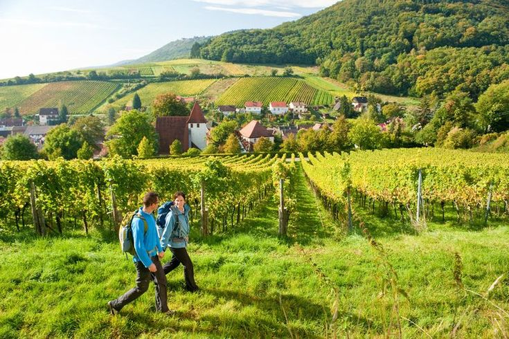 How to Picnic Like You're in German Wine Country