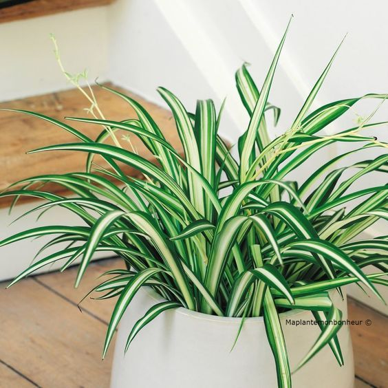 8 best plante interieur images on Pinterest Baby cards, Blue hair