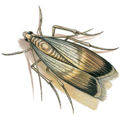 DIY Tip of the Day: Eliminate Meal Moths. Meal moths get into dry food like flour, beans, dried fruit and dog food. To kill them, put the food in the freezer for at least four days or heat it in a 130-degree oven for 30 minutes. Meal moths don't carry disease, so after picking the dead bodies and larvae out of the food, you can eat it. Store your food in glass or sturdy plastic containers with sealed lids.
