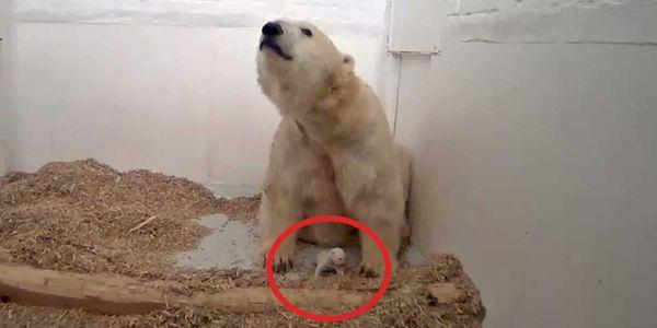 Petizione Tierpark Berlin Another Polar Bear Died Stop Polar Bear Breeding Release Polar Bears To Sanctuary Tierpark
