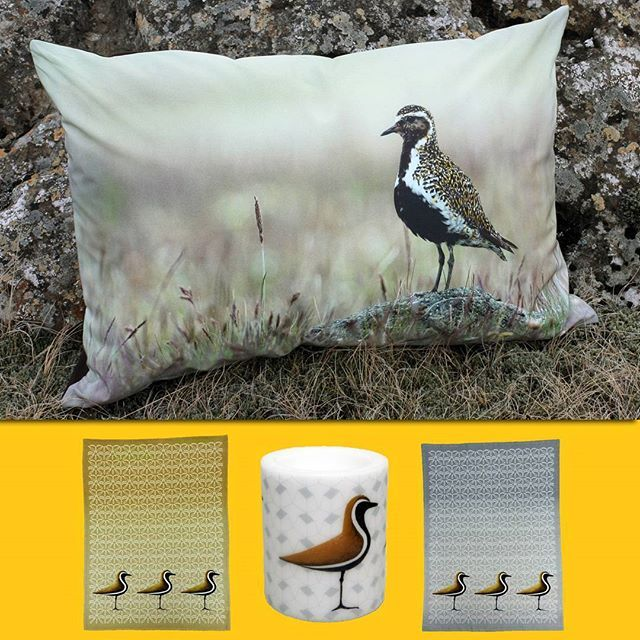 Lóan er komin - Hello Spring! 🌼The first golden plover of the season has arrived in South Iceland, which according to folklore, means that spring has come in Iceland! 🌻 The products are featuring the beautiful 'Lóa' or Golden Plover.  #hellospring #springvibes #lovespringtime #finallyspring #hellosunshine #goldenplover #loanerkomin #lóanerkomin #home #homedecor #decor  #goldenploverprints #kapustarinta #birds #soundofspring #plovers #lagdur #hekla #heklaíslandi