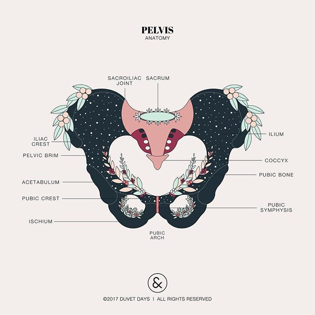 Did you know that men and women have slightly different shaped pelvises? Women have wider and flatter shaped pelvises compared to men to help with delivery of a child. Our bodies go through some amazing changes during pregnancy, but particularly our pelvis. The body prepares the pelvis for delivery by releasing relaxin hormones. These hormones helps relax our pelvic joints and ligaments while softening and widening our cervix. This allows the baby to pass through the birth canal more easily…