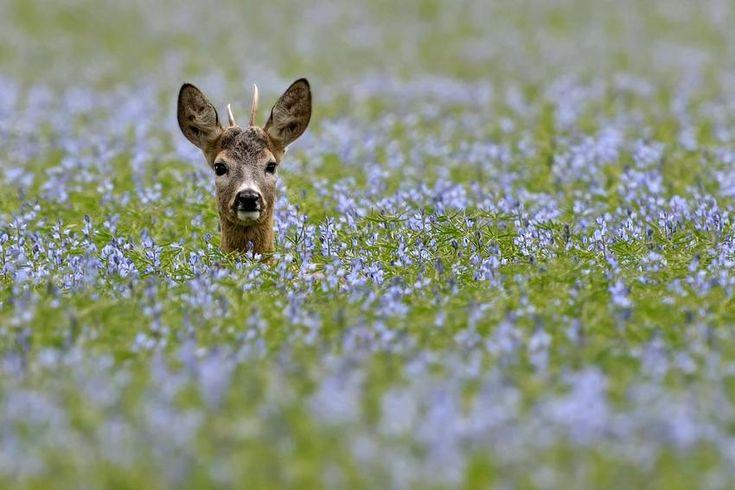 i love deer :)