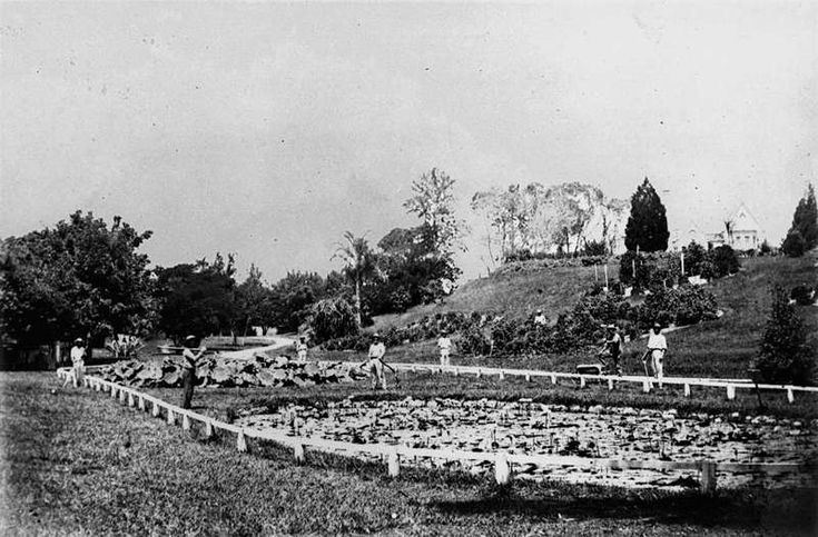 Lily pond and curator's cottage at the Botanic Gardens, Brisbane, ca. 1868