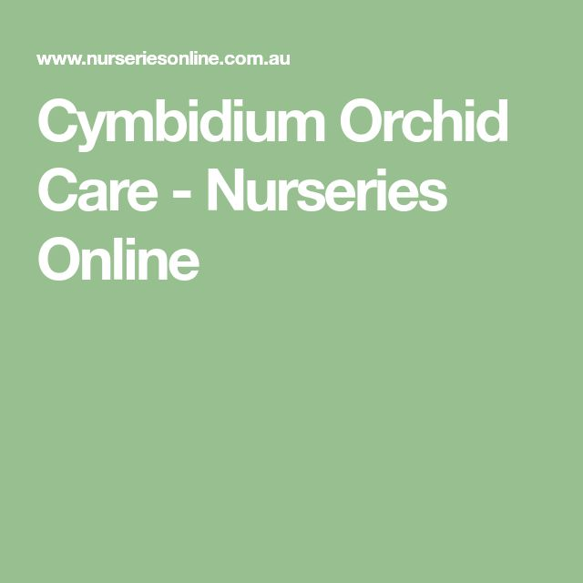 Cymbidium Orchid Care - Nurseries Online
