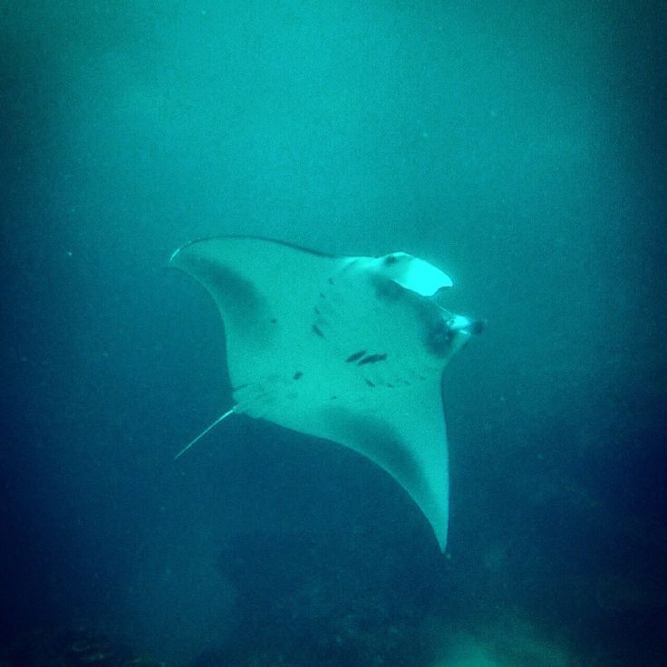 Manta Point Dive Site in Nusa Penida $189 for 3 dives. Price includes all. You just need bring sunscreen and towel :)