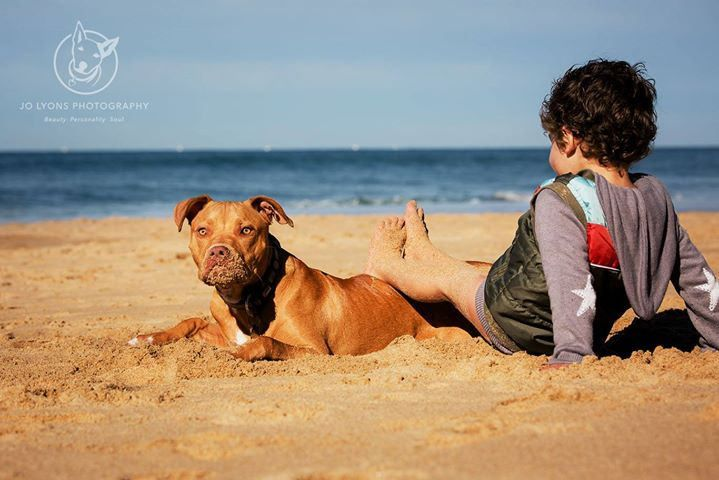 I wish all pound dogs found the the wonderful life this boy has... he was rescued by by No Kill Pet Rescue from Blacktown Pound and has landed the best home ever where he gets to spend his weekends at the beach and his weekdays with his Mum who works from | by Jo Lyons Photography