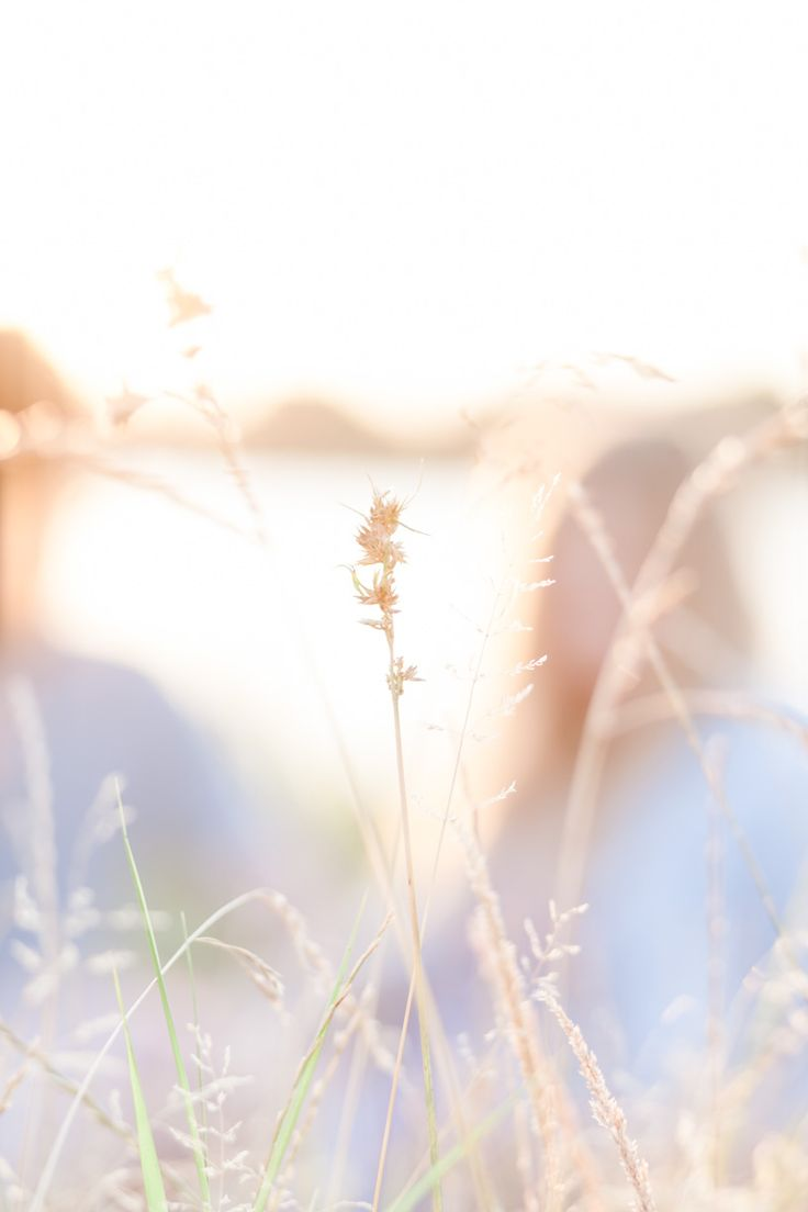 Nature and golden light.