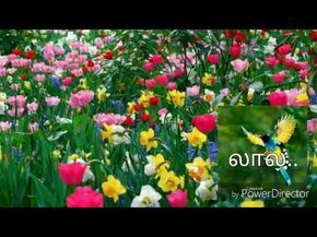 பிறந்தநாள் வாழ்த்து கவிதை குட்டி வீடியோ {Birthday Song in Tamil whatsapp Video} #050 - YouTube