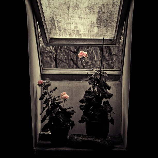.@fogelmannen | Flowers popping out... #art #picture #photography #pic #beautiful #exposure #...
