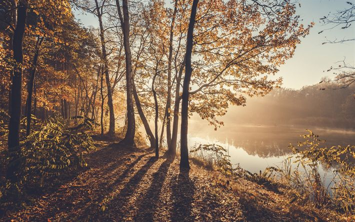 Download wallpapers autumn morning, river, fog, yellow trees, autumn landscape
