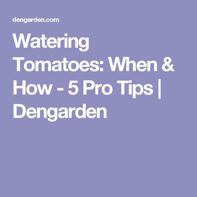 Watering Tomatoes: When & How - 5 Pro Tips | Dengarden