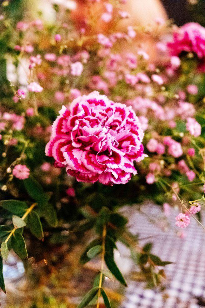 Roze anjer-Boeket maken- bloemschikken- to arrange flowers- http://www.mylucie.com