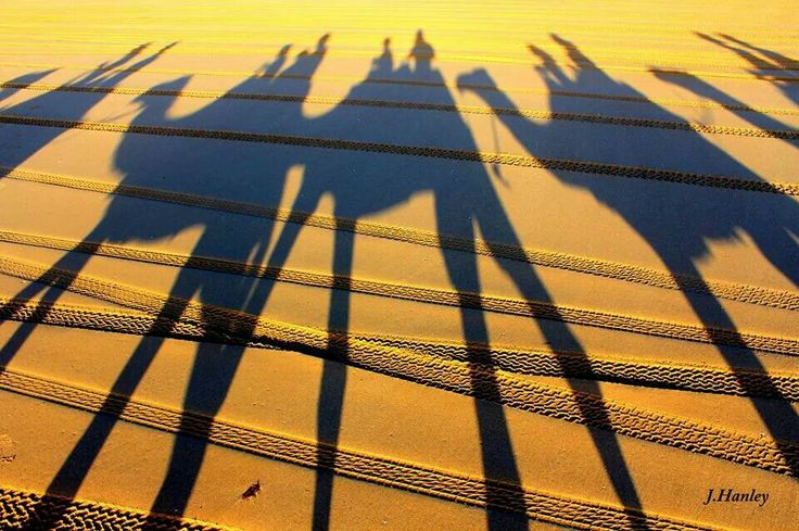 #sunset shadows #redsuncamels #broome #cablebeach
