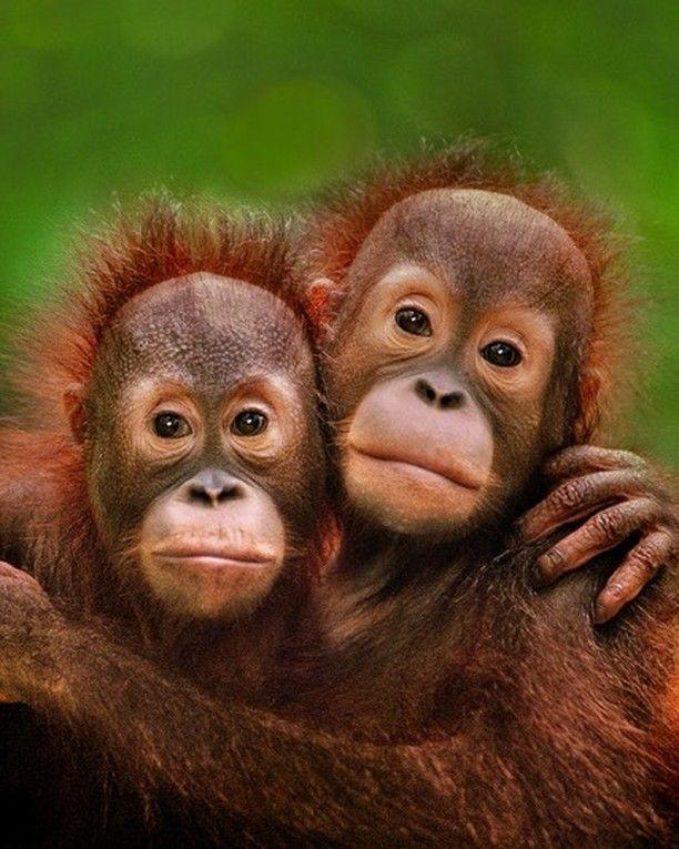пламени картинки двух обезьян смешные прекрасно справятся