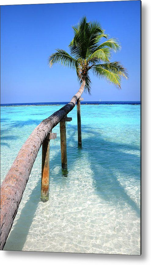 Low Bow. Tropical Palm Over Lagoon Metal Print by Jenny Rainbow.  All metal prints are professionally printed, packaged, and shipped within 3 - 4 business days and delivered ready-to-hang on your wall. Choose from multiple sizes and mounting options.  Maldives. Coconut palm tree on the tropical beach over the shallow blue water of the ocean lagoon.   #JennyRainbowFineArtPhotography #Maldives #TropicalArt #HomeDecor