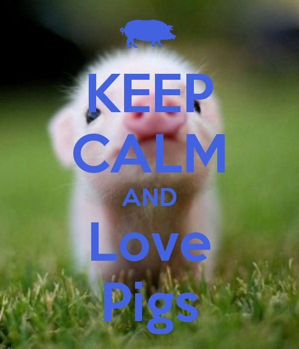 In honor of my recently acquired mini-pig, Gypsy