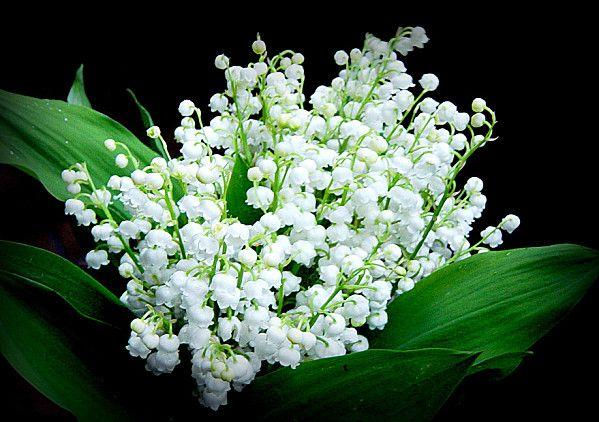 Bouquet de muguet en ce 1er mai =)