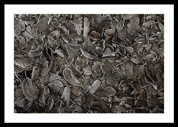 Framed Print of photograph Winter Carpet Of Frozen Leaves by Jenny Rainbow. Natural abstract of frozen dry tree leaves at the forest floor. Processed with brown monochromatic tones for nostalgic and vintage feel. Prints available in different sizes suitable for your interior, order online, delivery, 30 days money back guaranty. to start shopping just click on image. Enjoy!