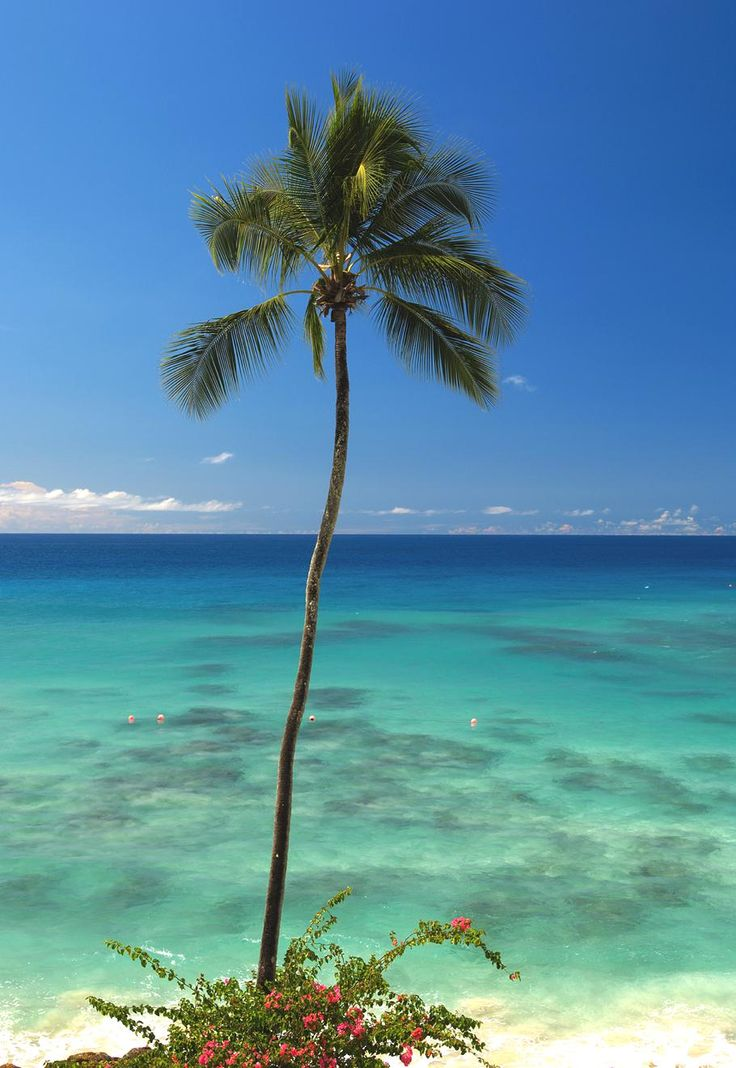 Luxury Hotel Cobblers Cove Barbados 8 Beach Scenes Pinterest The Cobbler Cove And Turquoise