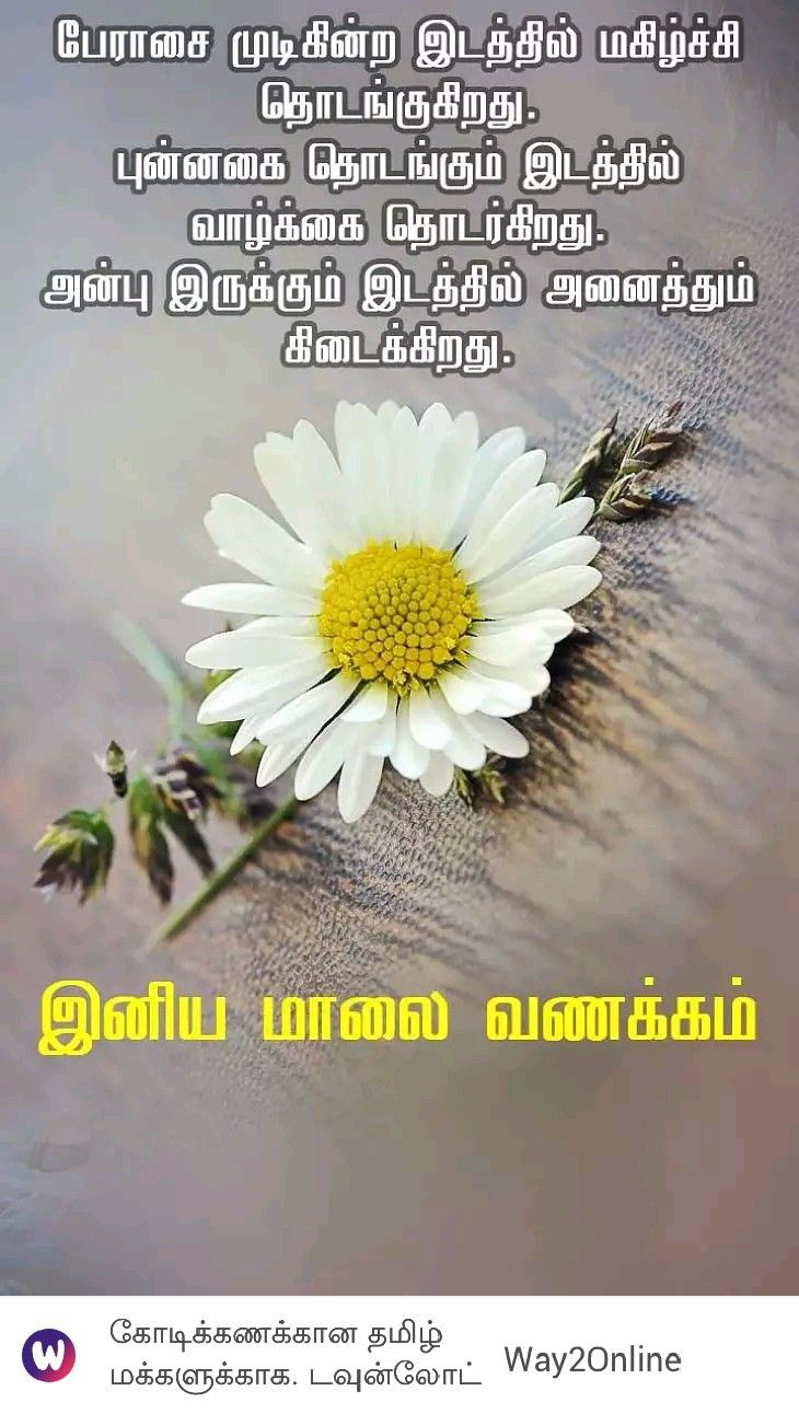 Pin By Lavanya On A Tamil Quotes In 2020 Plants Flowers Dandelion
