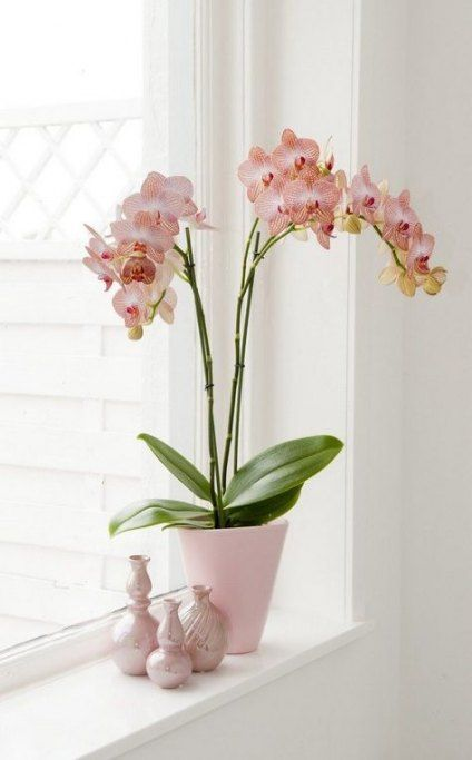 Plants indoor design water 40