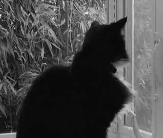 cat rescue orlando florida