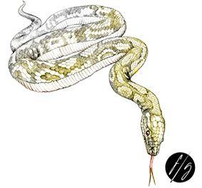 Snake tattoo Florence Gendre