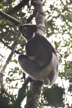 Vi har gjort noget, som vi aldrig har prøvet før: Vi har lejet en firhjulstrækker med privatchauffør i 14 dage! Det er den bedste måde at komme rundt i Madagascar på, da det er dyrt at flyve, og da fly ikke altid tager dig de rigtige steder hen, når dyr og nationalparker er interessen. For 14 dage siden, da vi …