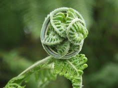 Image result for forged fern gate