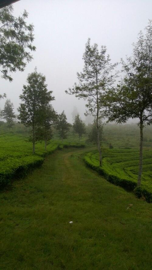 A Misty Pathway