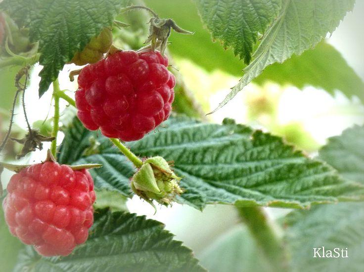 raspberry ice for breakfast