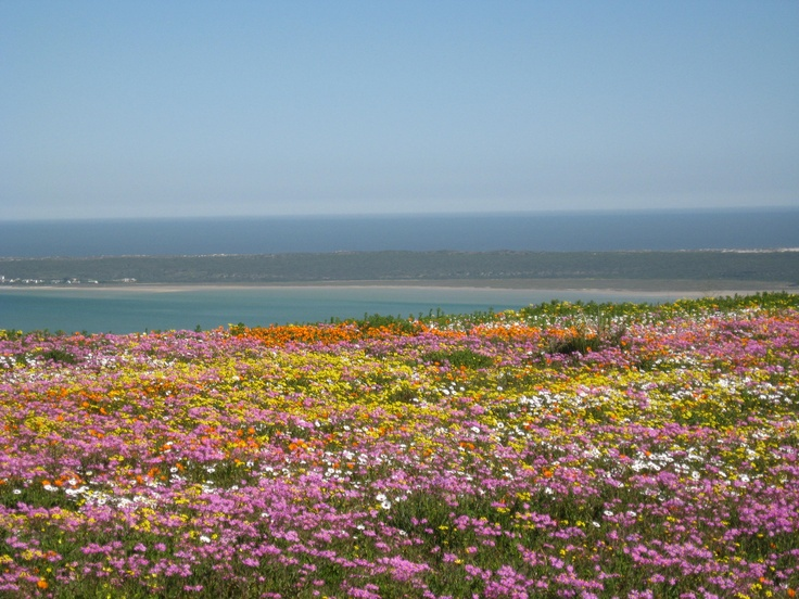 We have our fingers crossed that the West Coast 2012 flower season will look something like this
