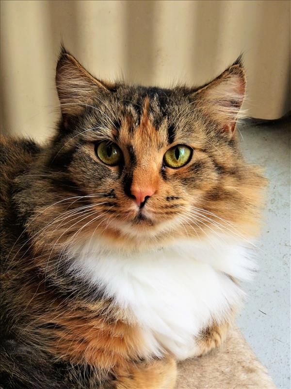 Claudia from Ipswich is looking for a fresh start and a loving, forever family. She's great company and an excellent listener. Come meet her today! http://bit.ly/2sslXxg