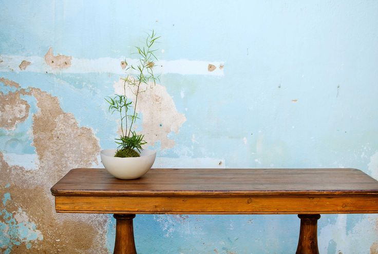 T o p o g r a p h y  -  Porcelain bowl with Kokedama by Blowawish #decoration #ceramic #art