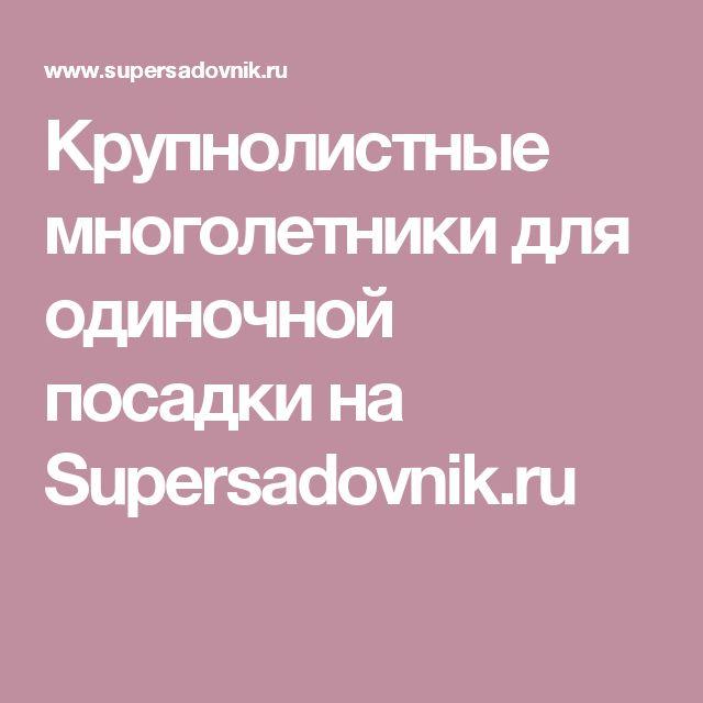 Крупнолистные многолетники для одиночной посадки на Supersadovnik.ru