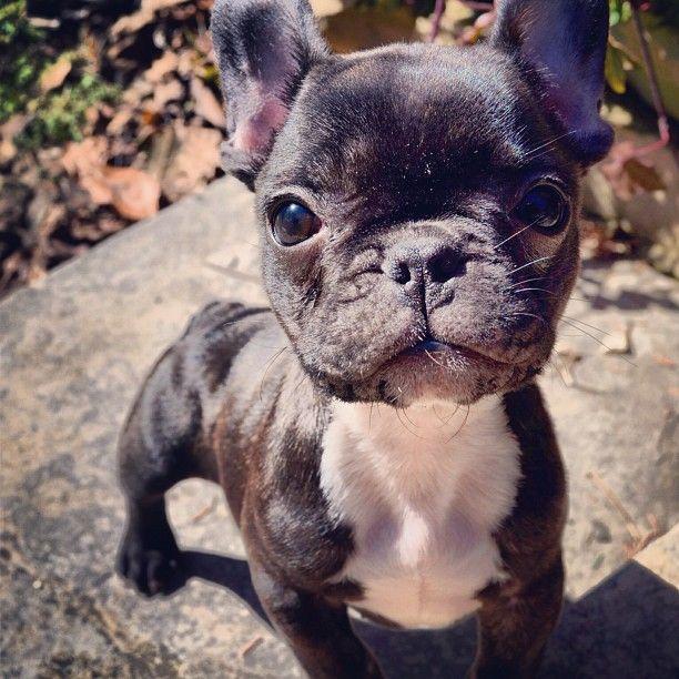 The wee baby Otis