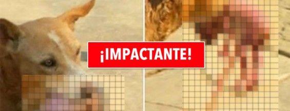 Perro callejero salva a un recién nacido arrojado a la basura. Imágenes impactantes! #viral