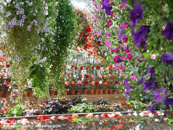Flower Garden Wallpaper 51 best flower/landscape wallpaper images on pinterest | landscape