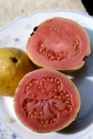 Guayaba, guava... koejawel...