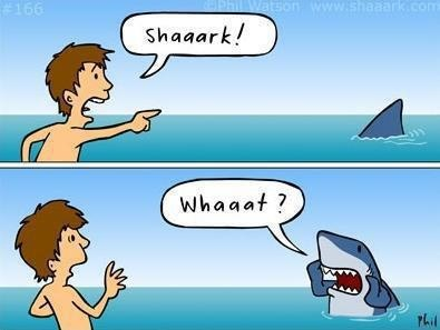 : Shaaark, Funny Things, Jokes, Funny Pictures, Giggl, Funny Stuff, Hilarious, Smile, Sharks Week