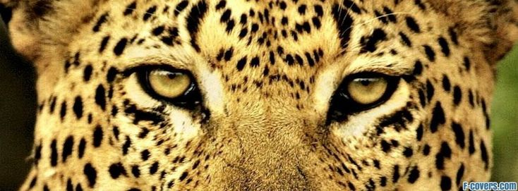 39 Best Images About Cheetah Prints On Pinterest