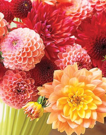 These would really perk things up in these cold dark days of January! Dahlias - @CountryLiving