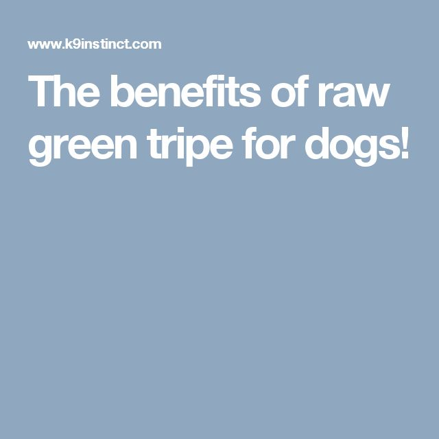 The benefits of raw green tripe for dogs!